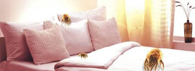Professional Mattress Cleaning  Bayswater North