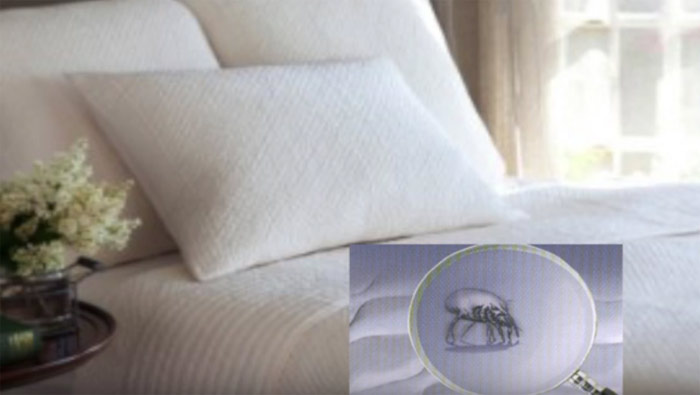 Professional Mattress Cleaning  Forest Lake